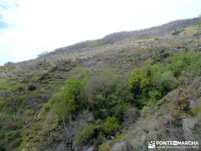 Cerezos flor Jerte; Nogaleas; senderismo en madrid; clubs montaña madrid;parques naturales murcia